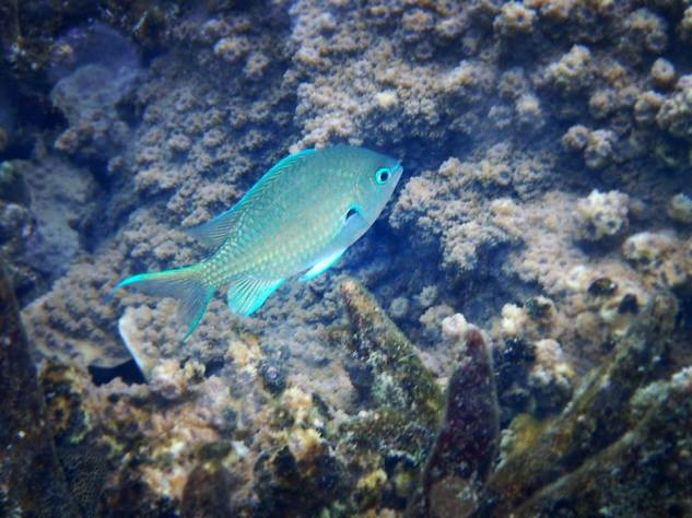 Beautiful Glowing Fish