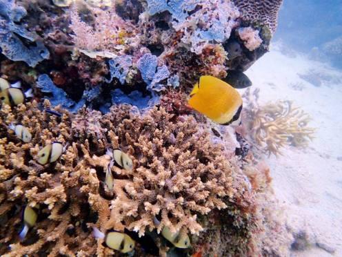 Cool Yellow Fish