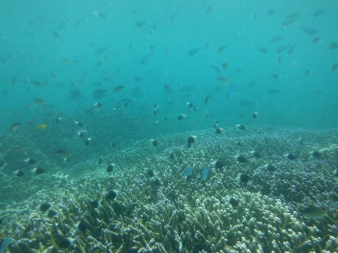 Fish School 3